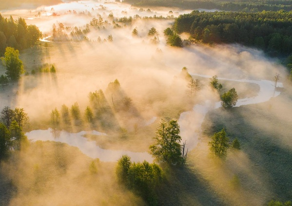 La forêt, une bouffée d'oxygène pour la planète