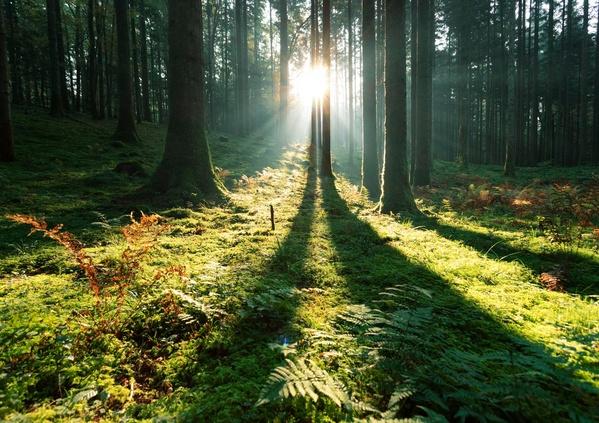 Pourquoi l'exploitation des forêts est-elle indispensable ?