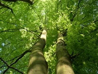 La construction bois, éco-logique