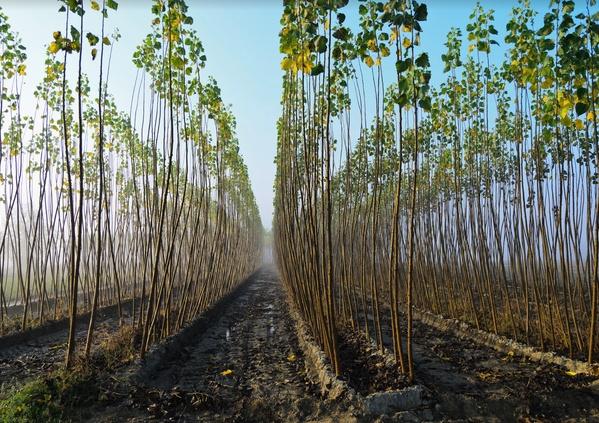 Le choix du bois pour un « avenir durable »