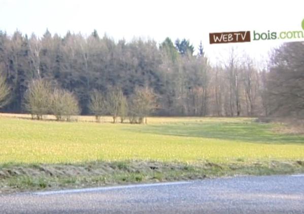 [Vidéo] Le bois : Puits de carbone