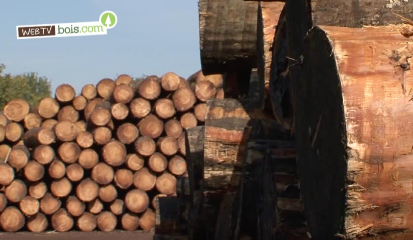 [Vidéo] Bois : Cycle de vie