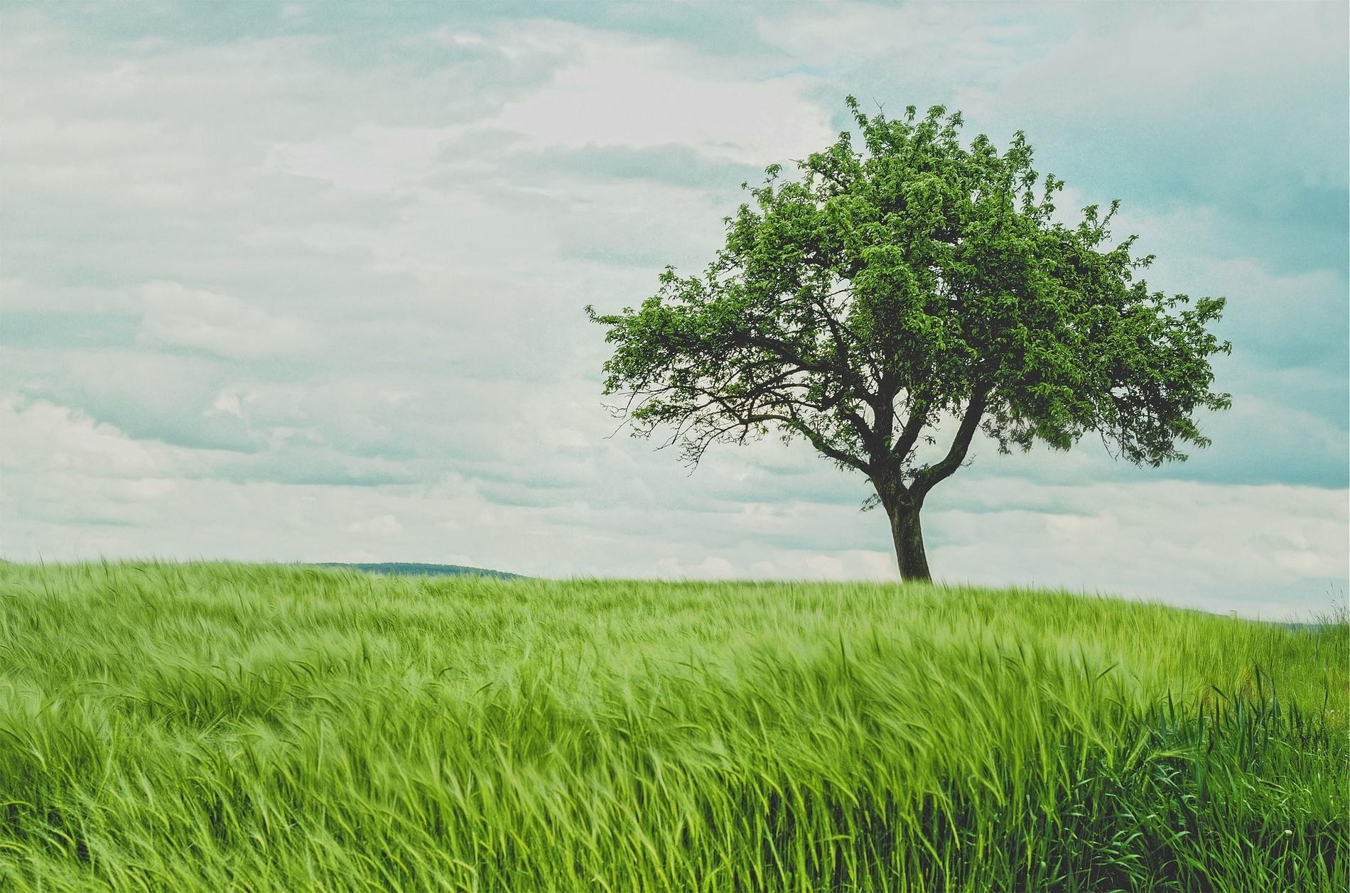 Recherche de terrain : 7 conseils pour réussir