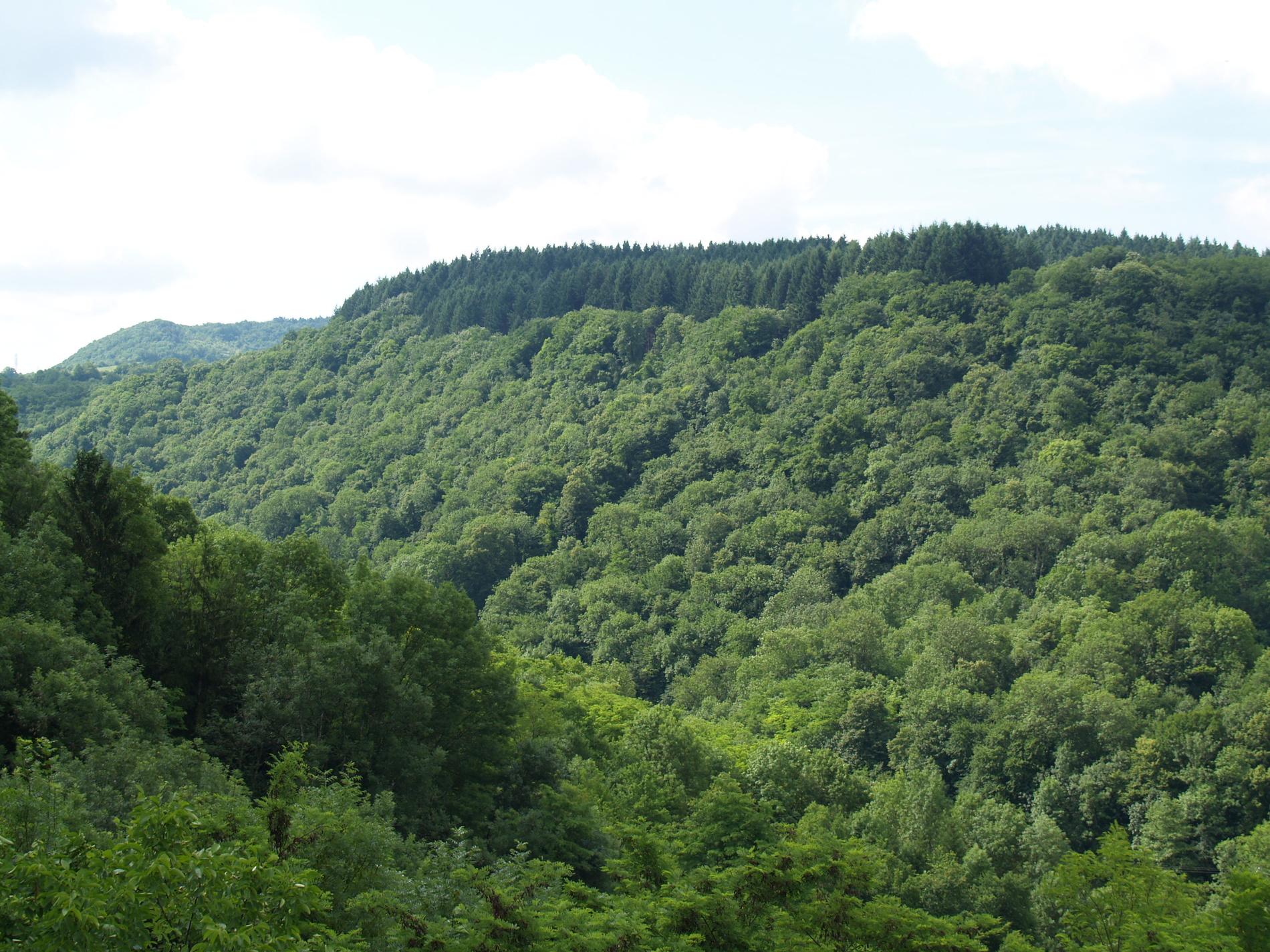 Des français attachés à leur forêt