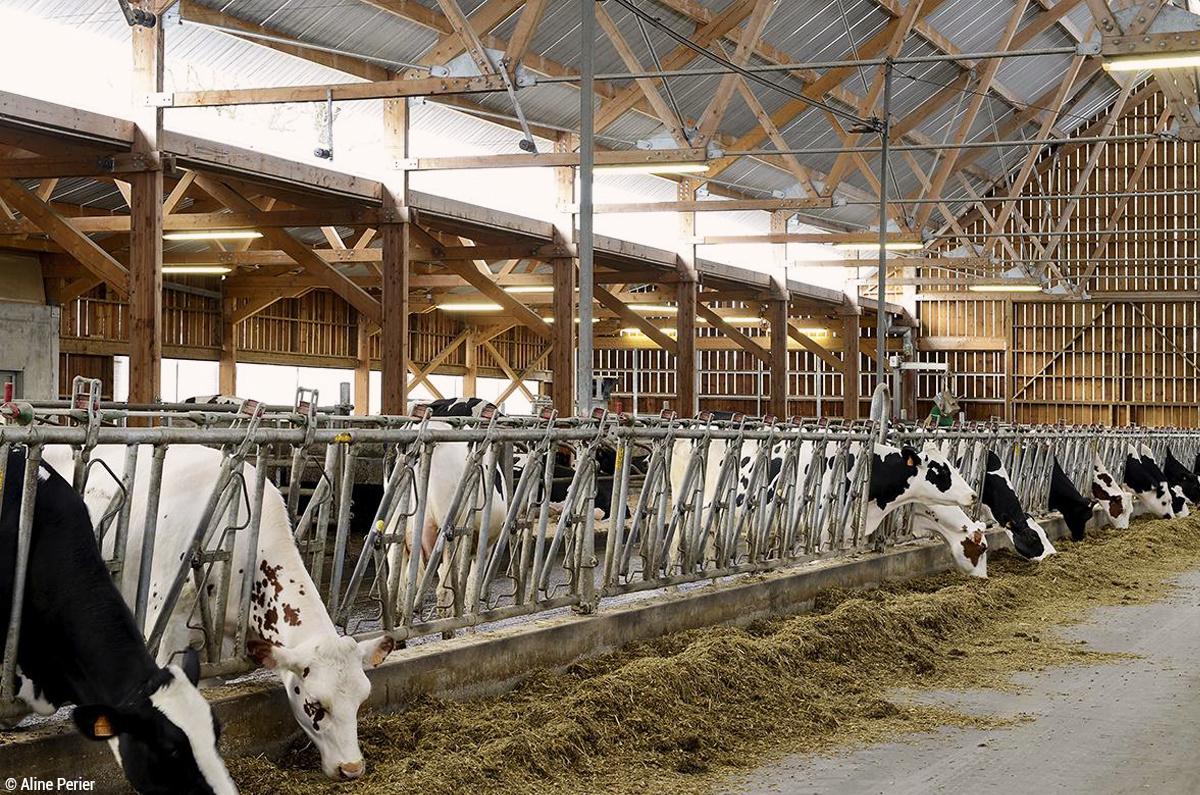 Près de Lyon, au Domaine de Cibeins, un bâtiment en bois pour améliorer la production laitière