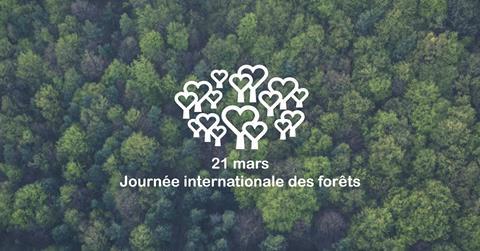La Journée internationale des forêts, un programme d'éducation au développement durable coordonné en France par Teragir. Ouvert à tous, participez et venez célébrer la forêt, l'arbre et le bois !
