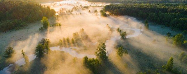 La forêt et le bois contre l'effet de serre