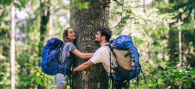 Sylvothérapie, quand les arbres nous soignent