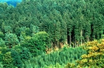 Forêt française : l'accueil des usagers