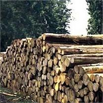 Couper du bois : On tue la forêt ?