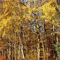 Evolution : Nos forêts diminuent ?