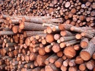 L'énergie grise et le bois