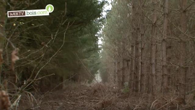 [Vidéo] Évolution des forêts en France