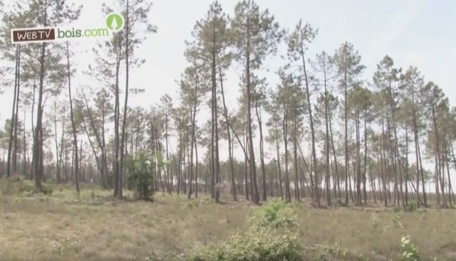 [Vidéo] Forêt européenne : Gestion durable