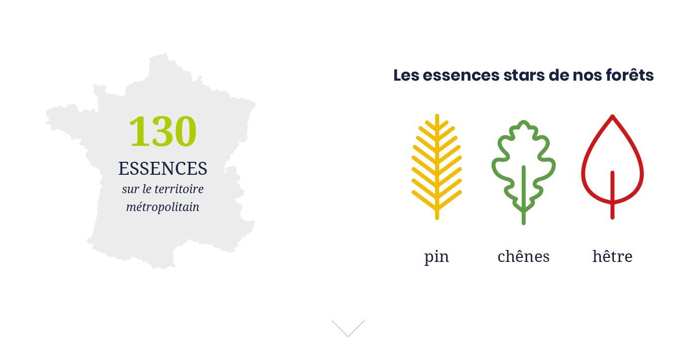 130 essences de bois présentent en France (Pin, chêne, hêtre, etc.)