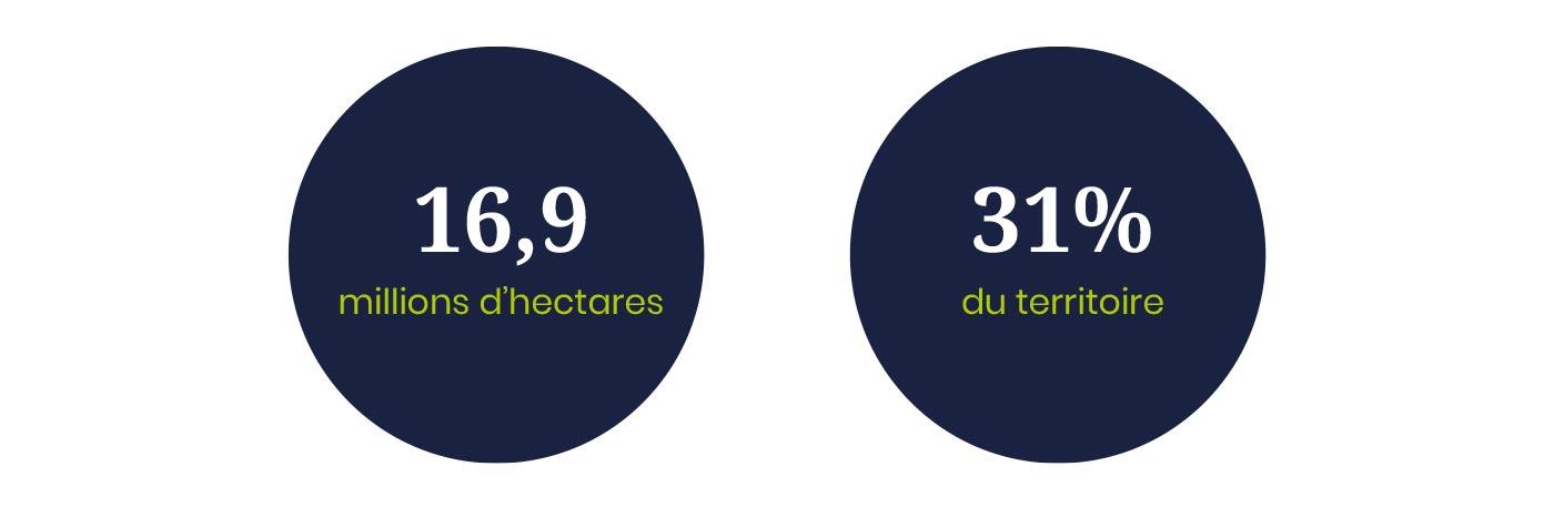 Les forêts françaises représentent 16,9 millions d'hectares et 31% du territoire.