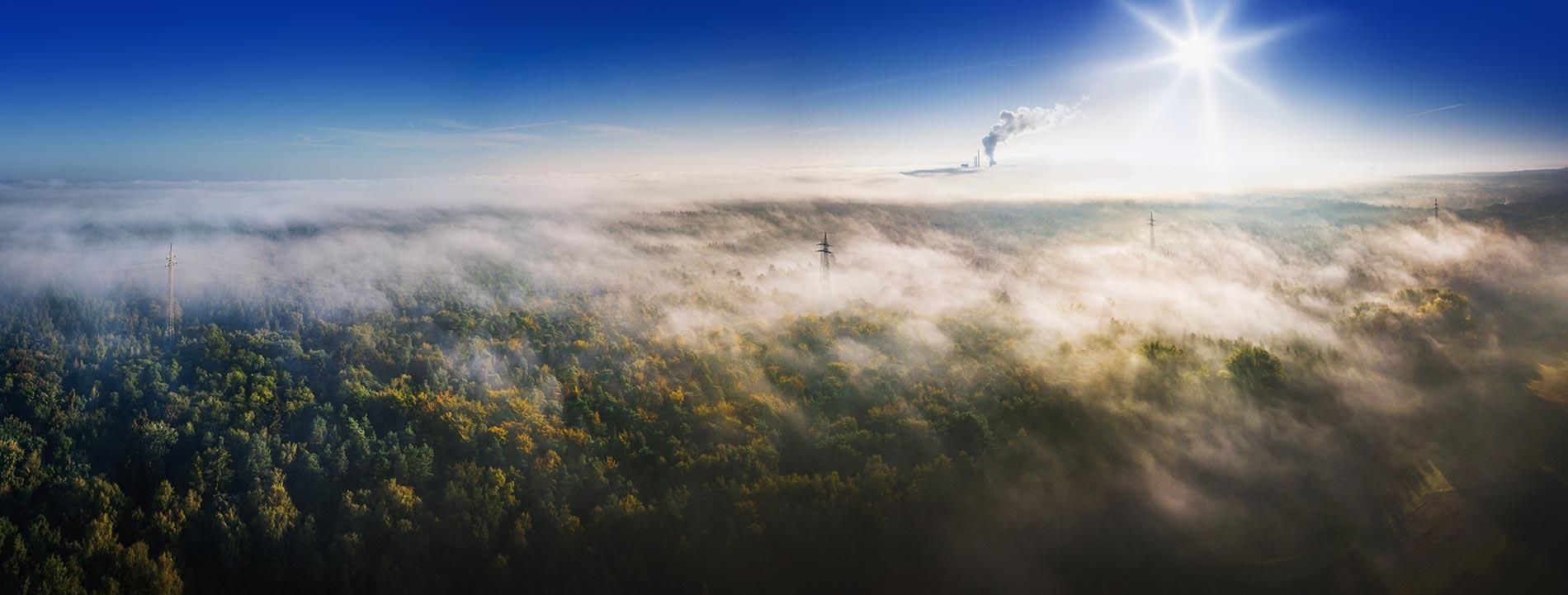 Une forêt vue du ciel