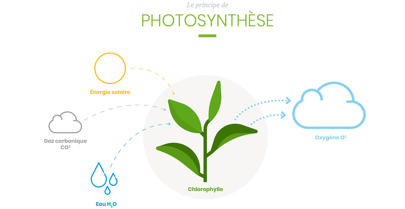 Schéma illustrant le principe de photosynthèse