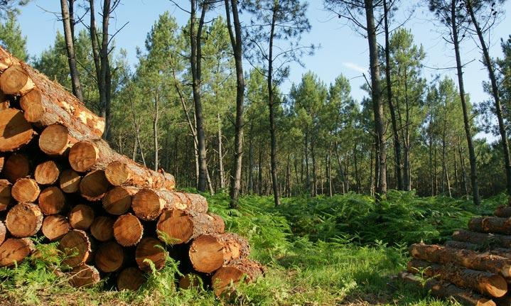 Une forêt exploitée raisonnablement