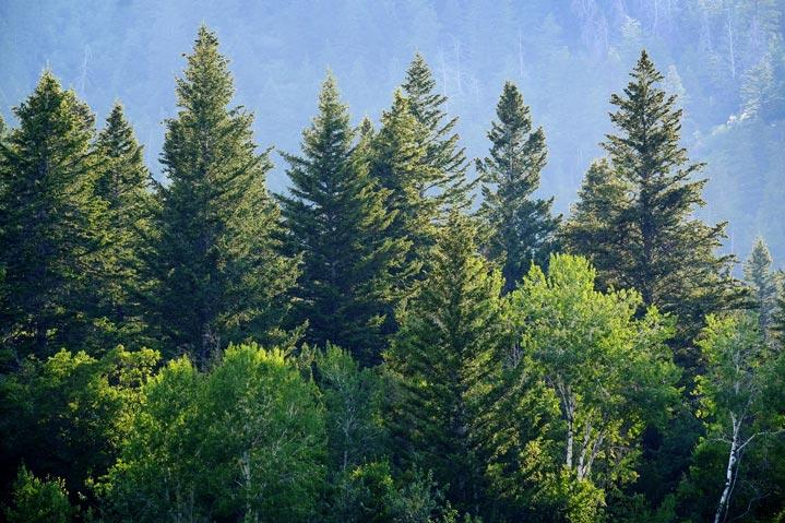 Visuel d'une forêt